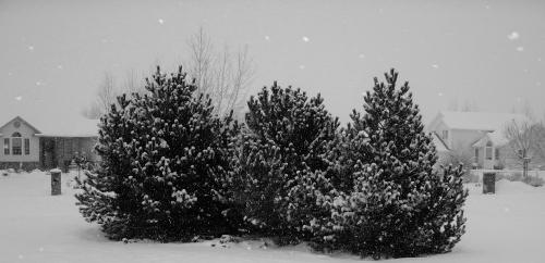 Snow on the trees outside mi casa